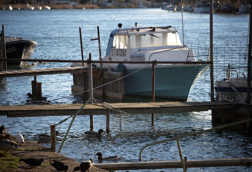 Bateaux et canards sur l'Hérault