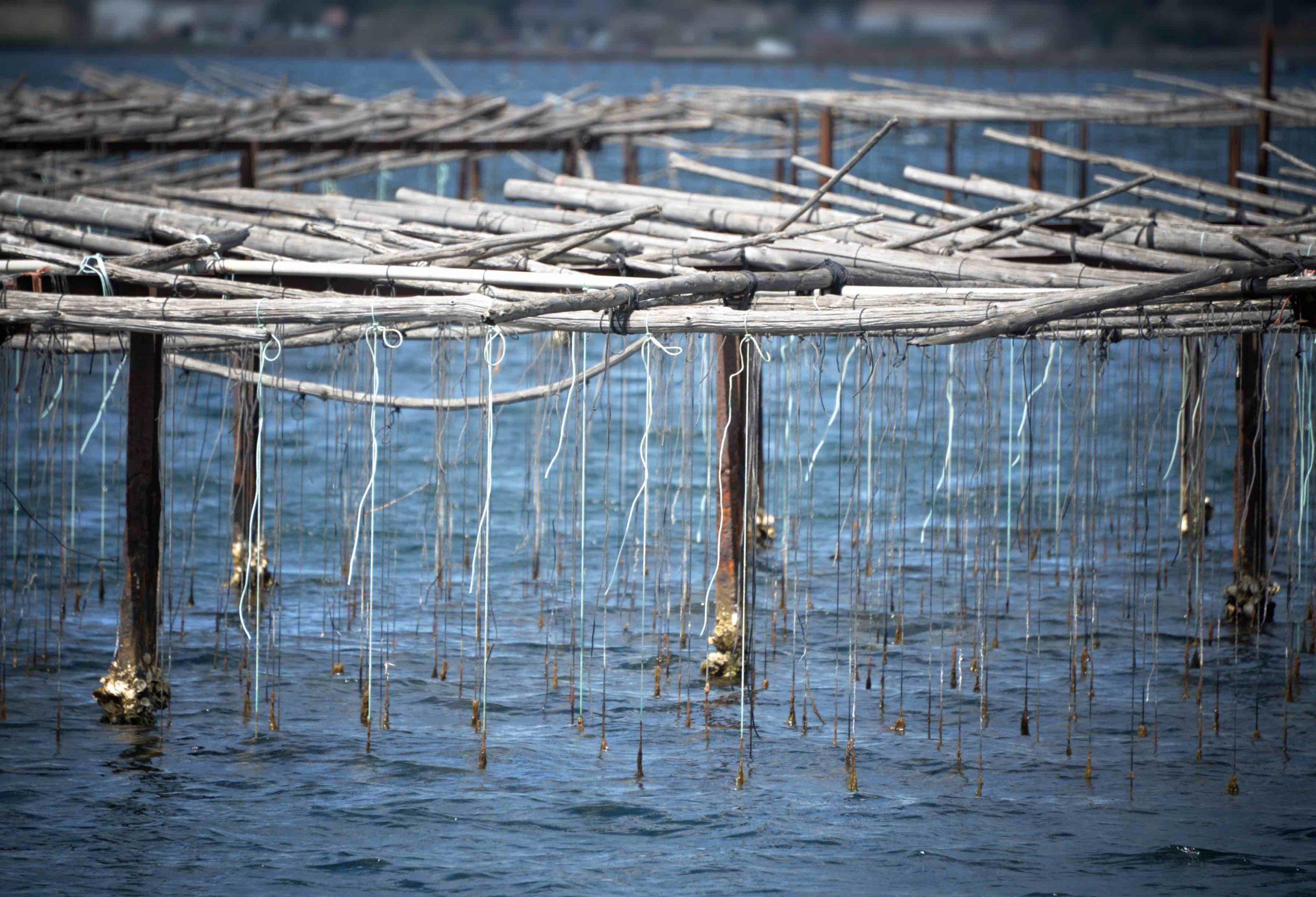 Table d'élevage d'huitres sur l'étang de Thau